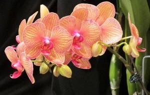 Много красиви орхидеи цветя