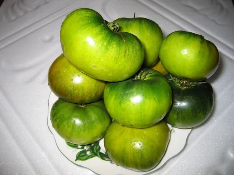 Зелените домати от сорта блато не променят цвета си, когато узреят