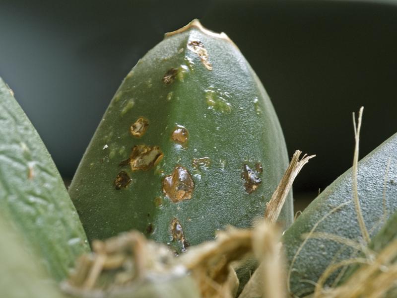 Растения в къщата и грижи за тях