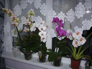 Правилната грижа за домашната ви орхидея