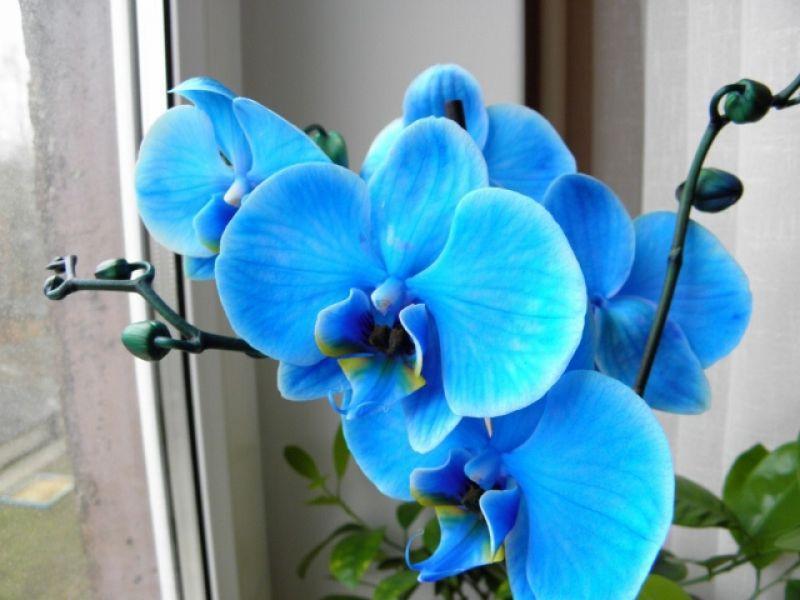 Различни цветове на орхидеи