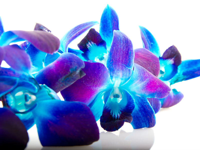 Характеристики за грижа за орхидеите