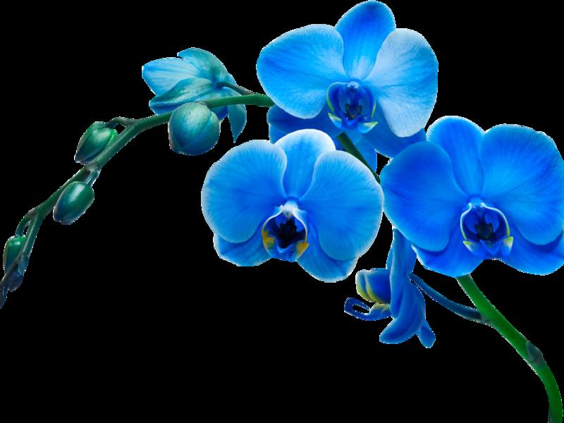 Отглеждане на орхидея