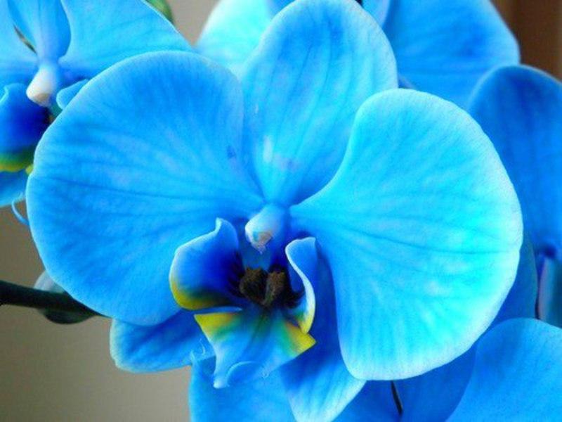 Стайна растителна орхидея