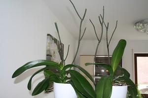 Правила за грижа за орхидеите