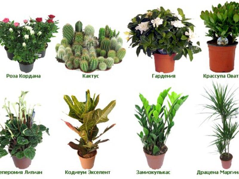 На фигурата са показани различни стайни цветя.