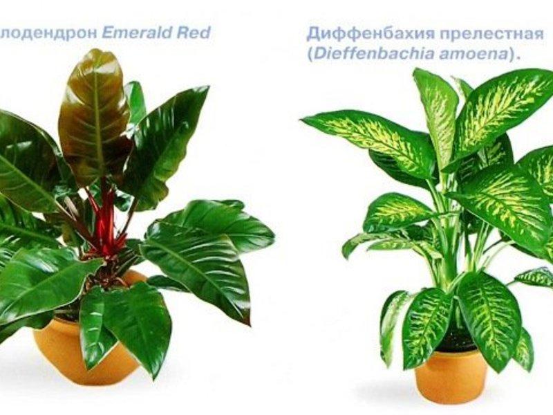 Сенколюбиви цветя и други стайни растения