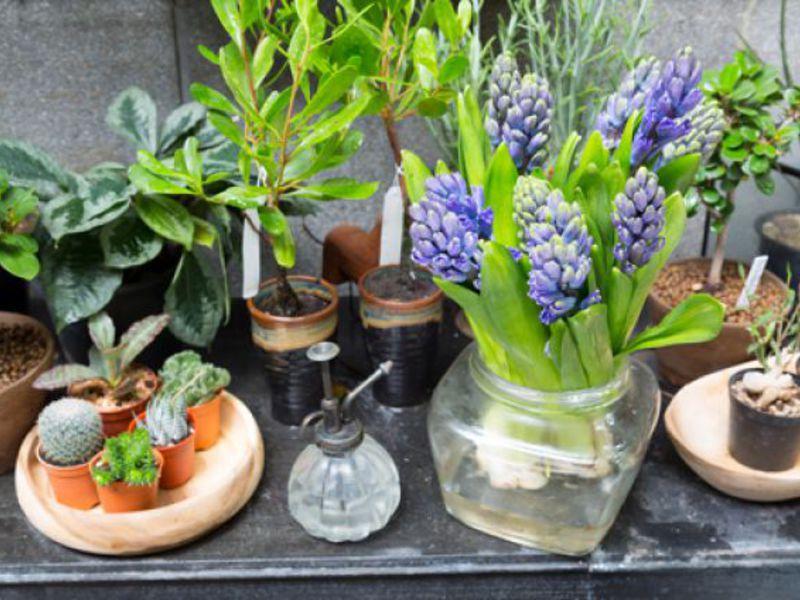 Зимната градина може да бъде подредена не само в къщата, но и в малък апартамент.
