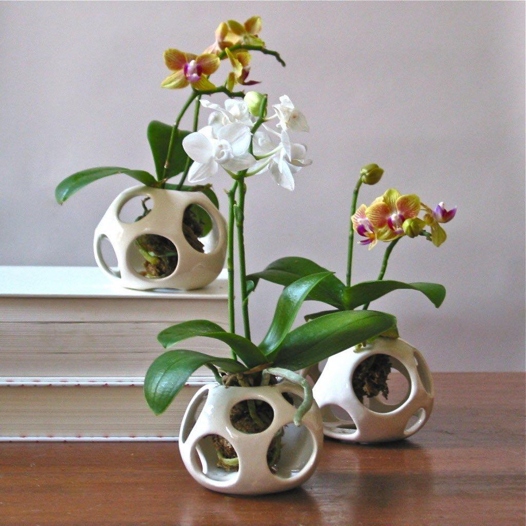 Трансплантации на орхидеи Phalaenopsis у дома: съвети, видео