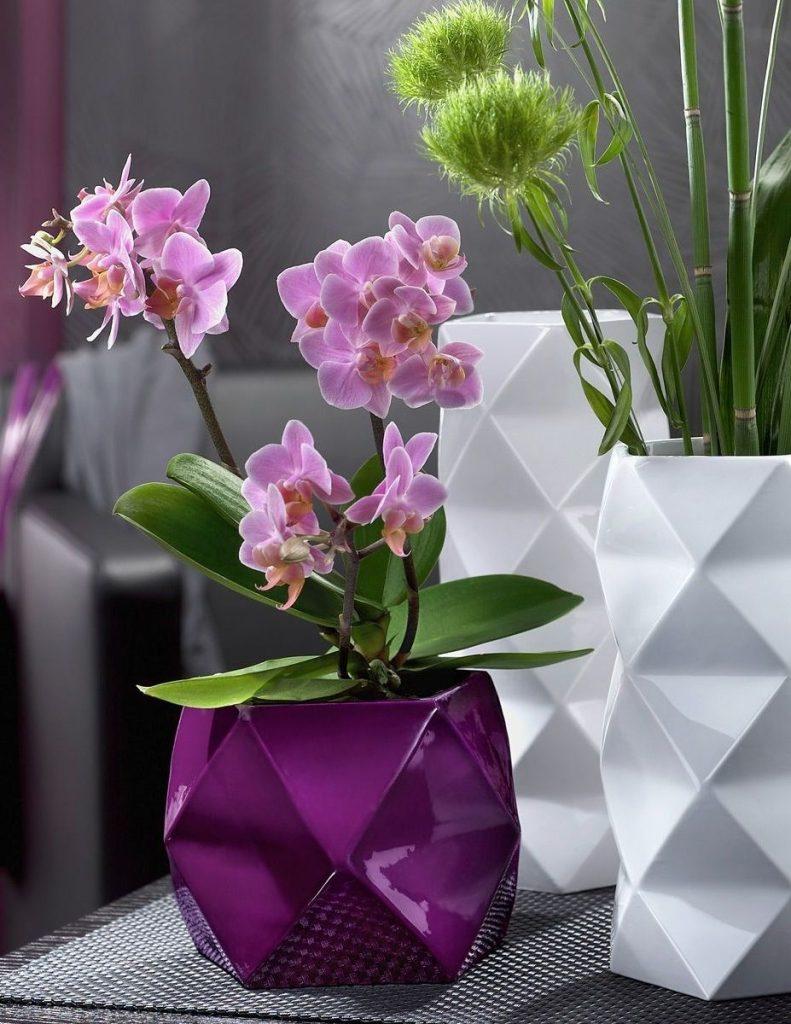 Jak se starat o orchideje doma: funkce péče, fotografie