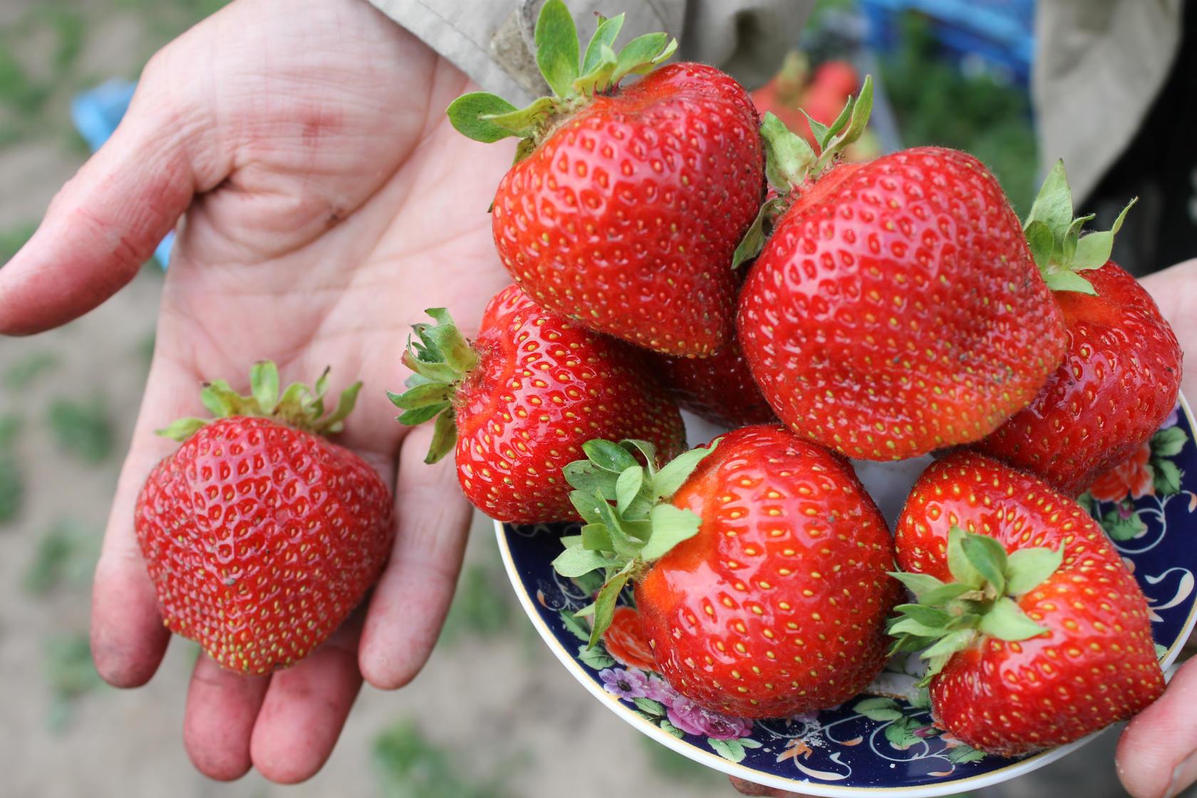 Ягоди във вашия имот: трудни за грижи, но радост за бране