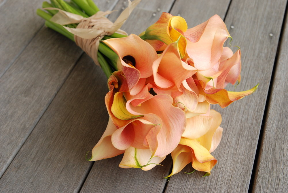 Значенията, дадени на цветя на кала